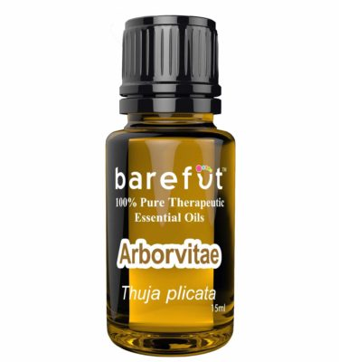Arborvitae Essential Oil