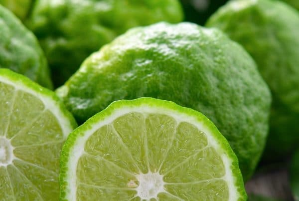 Bergamot Essential Oil Uses Benefits and Recipes