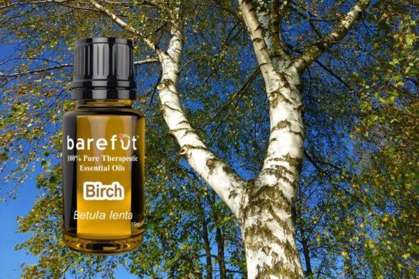 Birch Essential Oil Betula lenta