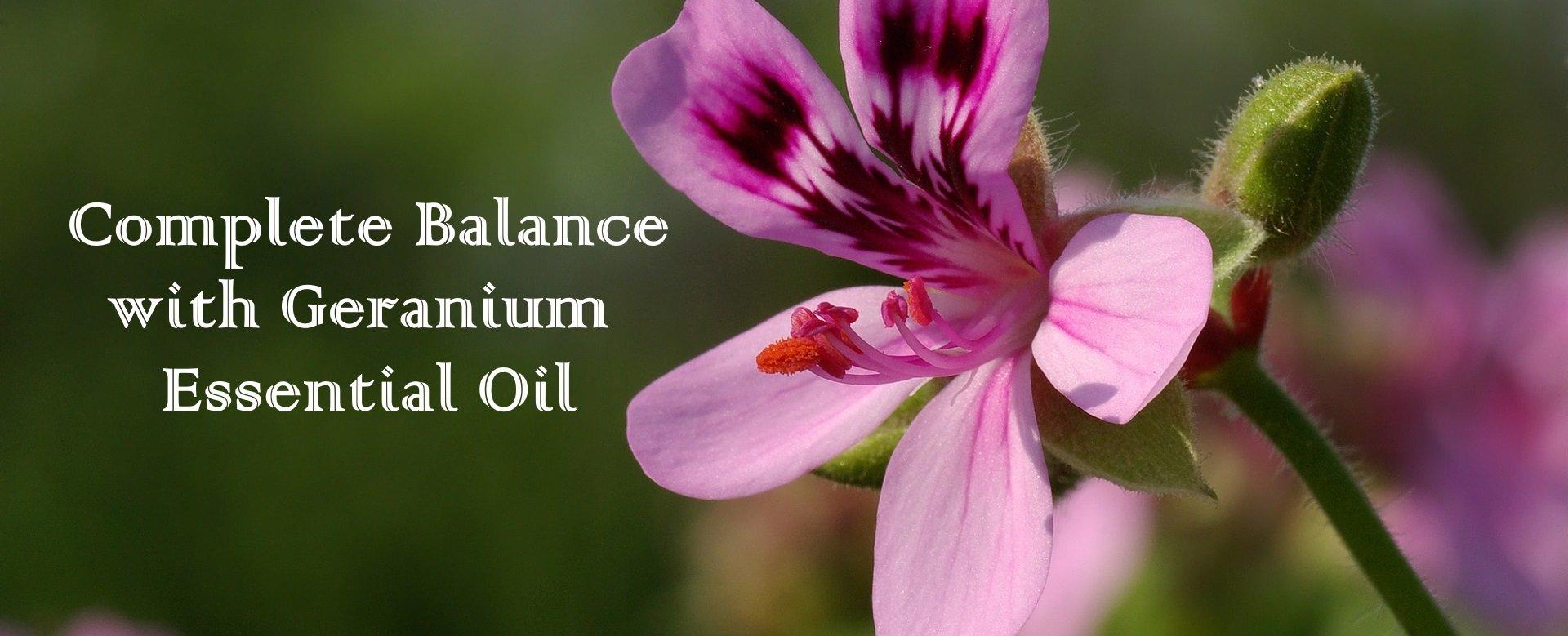 Complete Balance with Geranium Essential Oil