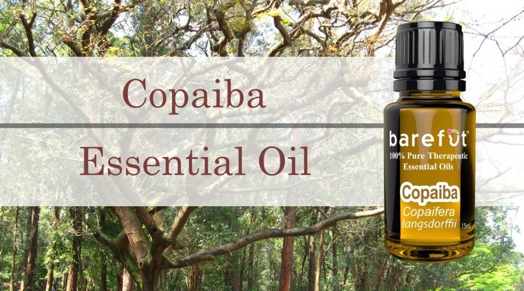 Copaiba Essential Oil Benefits