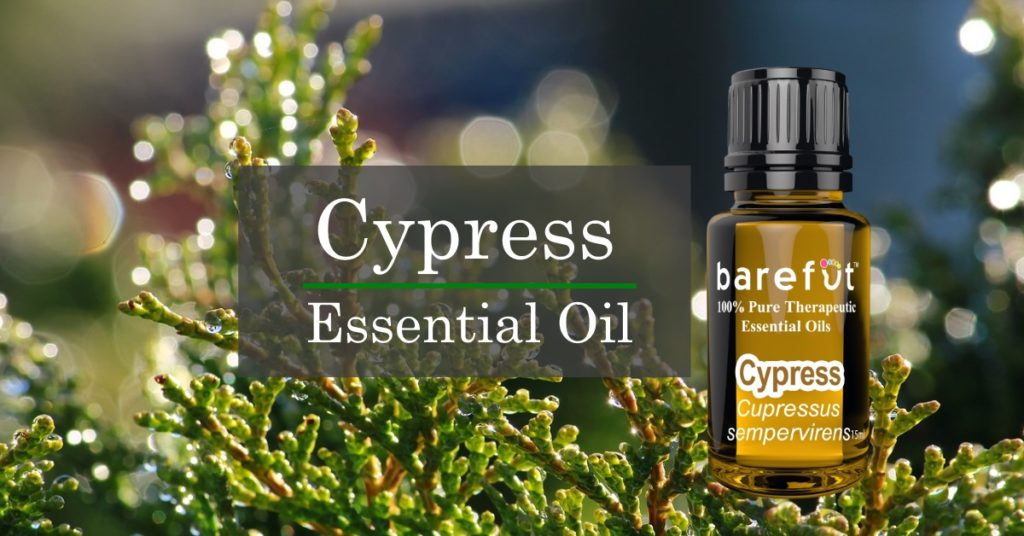 Cypress Essential Oil Spotlight