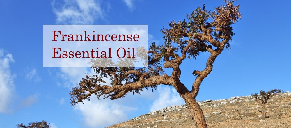Frankincense Essential Oil Blog Post