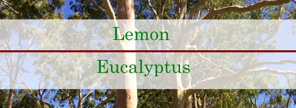 Lemon Eucalyptus Essential Oil Benefits