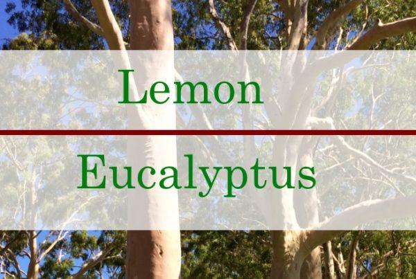 Lemon Eucalyptus Essential Oil Benefits