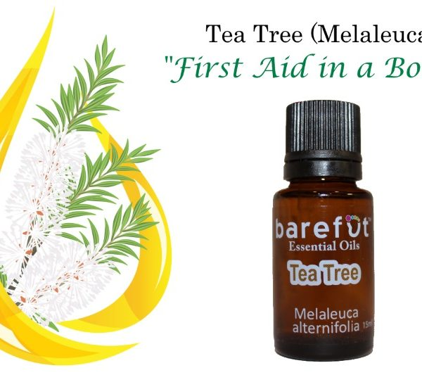 Melaleuca Tea Tree Essential Oil
