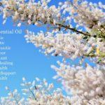 Myrrh Essential Oil Benefits