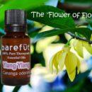 Ylang Ylang Flowers Essential Oil Uses