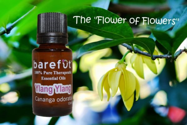 Ylang Ylang Flowers Essential Oil Uses