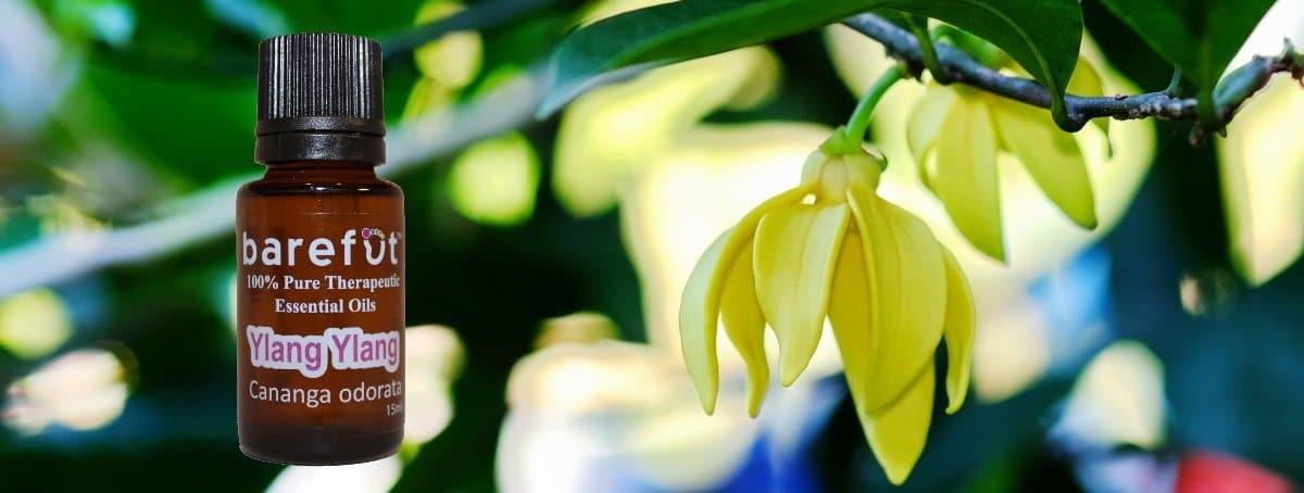 Ylang Ylang Flowers Essential Oils
