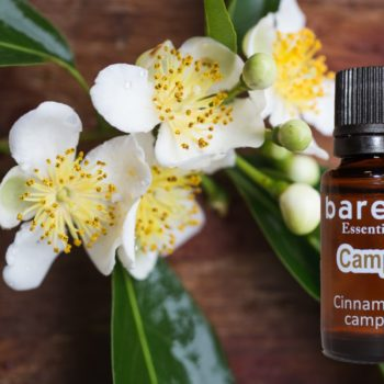 barefut Camphor Essential Oil