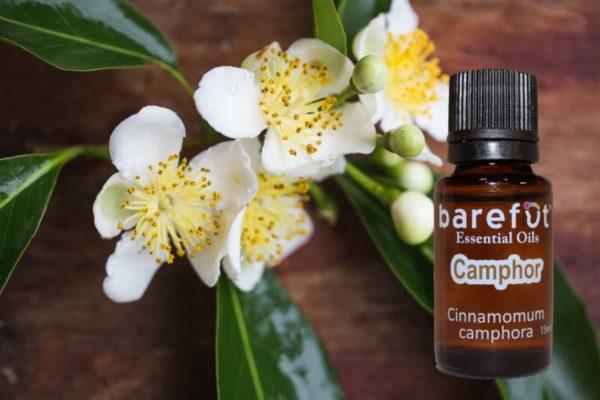 barefut Camphor Essential Oil