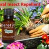 Thyme Essential Oil - Natural Insect Repellent for Gardens
